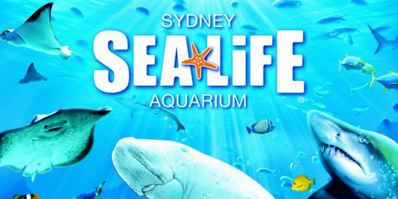 Australia-Sydney-Sea-Life-Aquarium-14-themed-zone-800x400.png